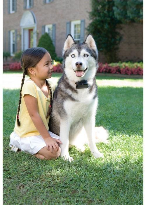 Petsafe Láthatatlan kerítés standard kis és közepes kutyáknak PRF-3004W-20 4